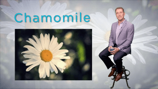 Discover Nature's Remedies | Chamomile