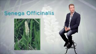 Discover Nature's Remedies | Senega Officinalis